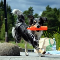 hundbild.3